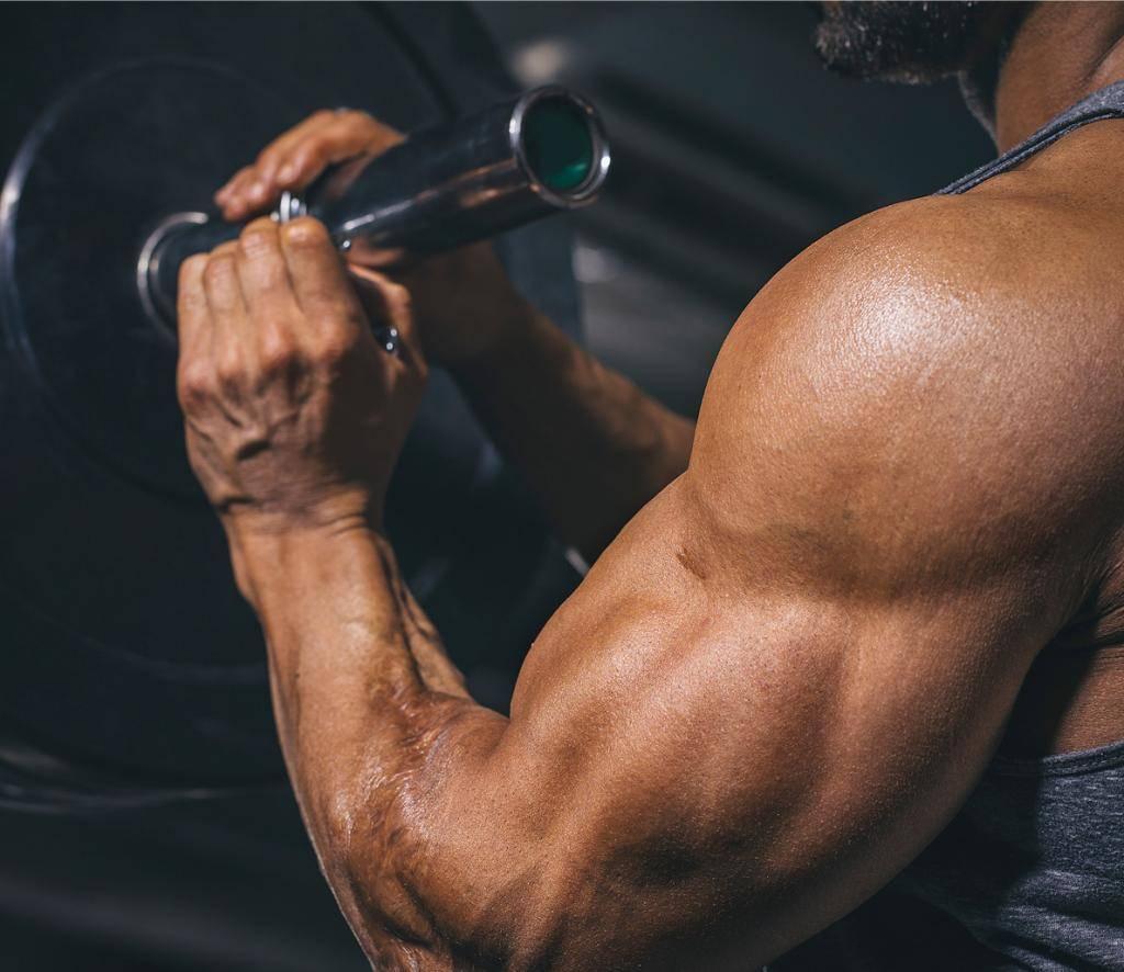 Рост мышц и разнообразие в тренировочной программе