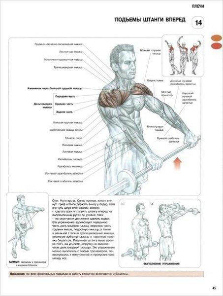 Пирамида построения мышечной массы