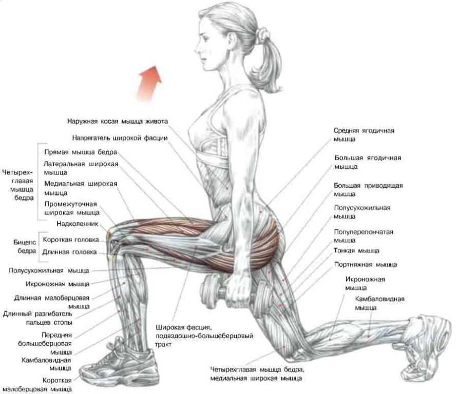 Как правильно делать упражнение «стульчик» у стены» — 4 вида движения и какие мышцы работают?