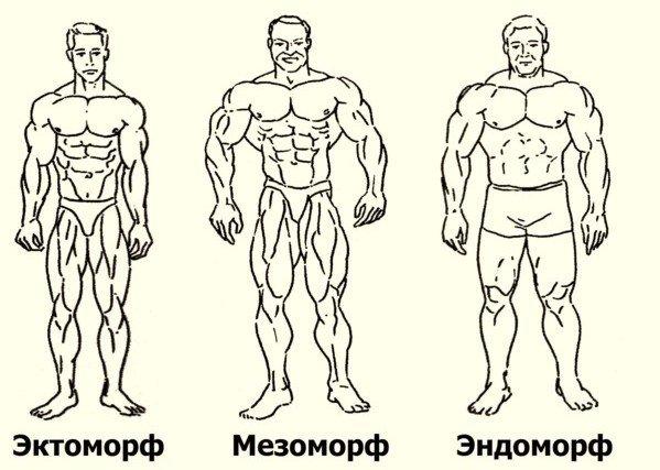 Программа тренировок для эндоморфа на похудение, на массу и рельеф (фото и видео)