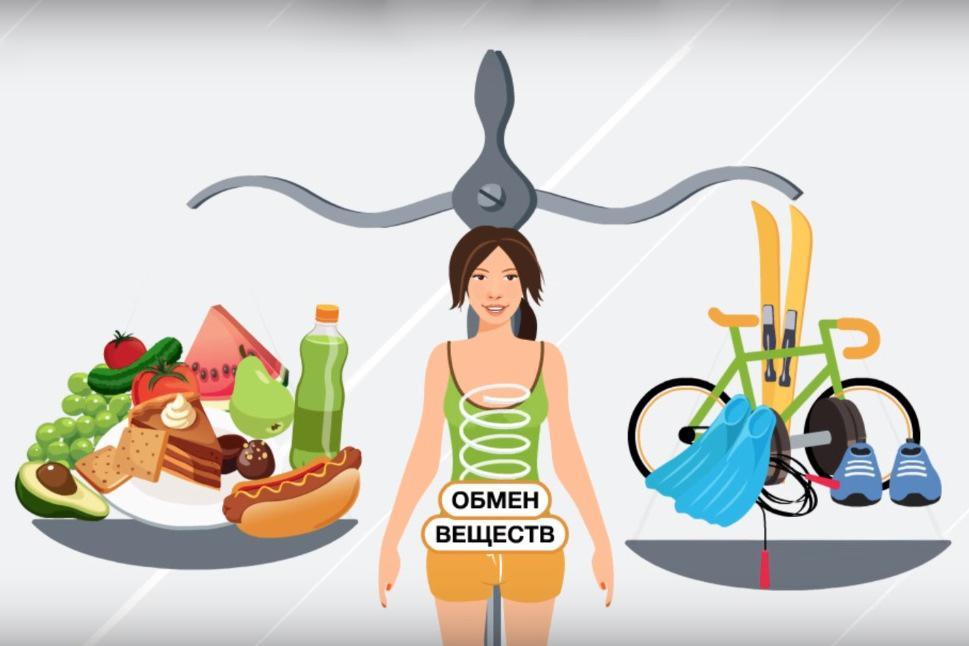 Что такое катаболизм? процессы катаболизма, этапы