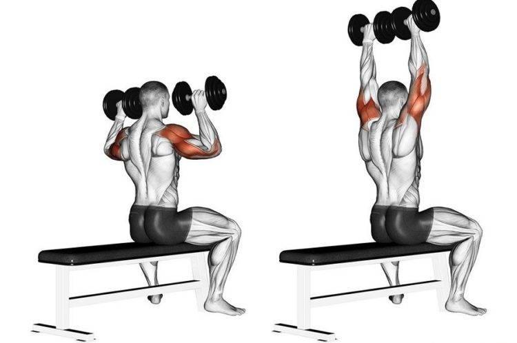 Тренировочный комплекс упражнений с гантелями для того, чтобы накачать бицепсы | rulebody.ru — правила тела