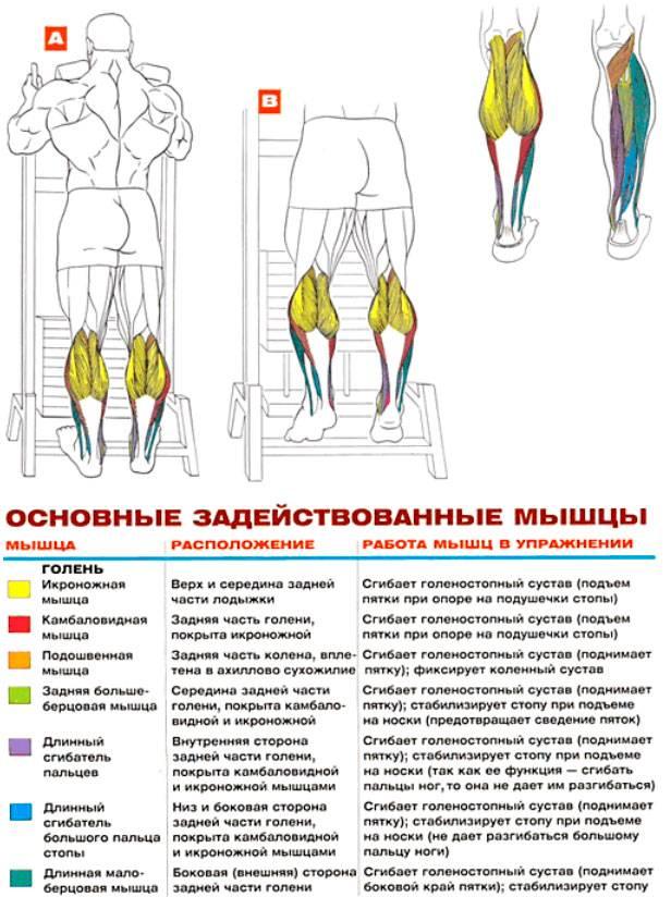 Подъём на носки стоя в тренажёре | бомба тело