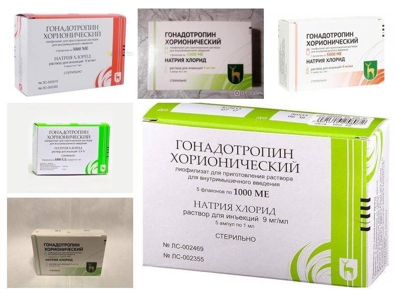 Гонадотропин хорионический на курсе и после курса стероидов