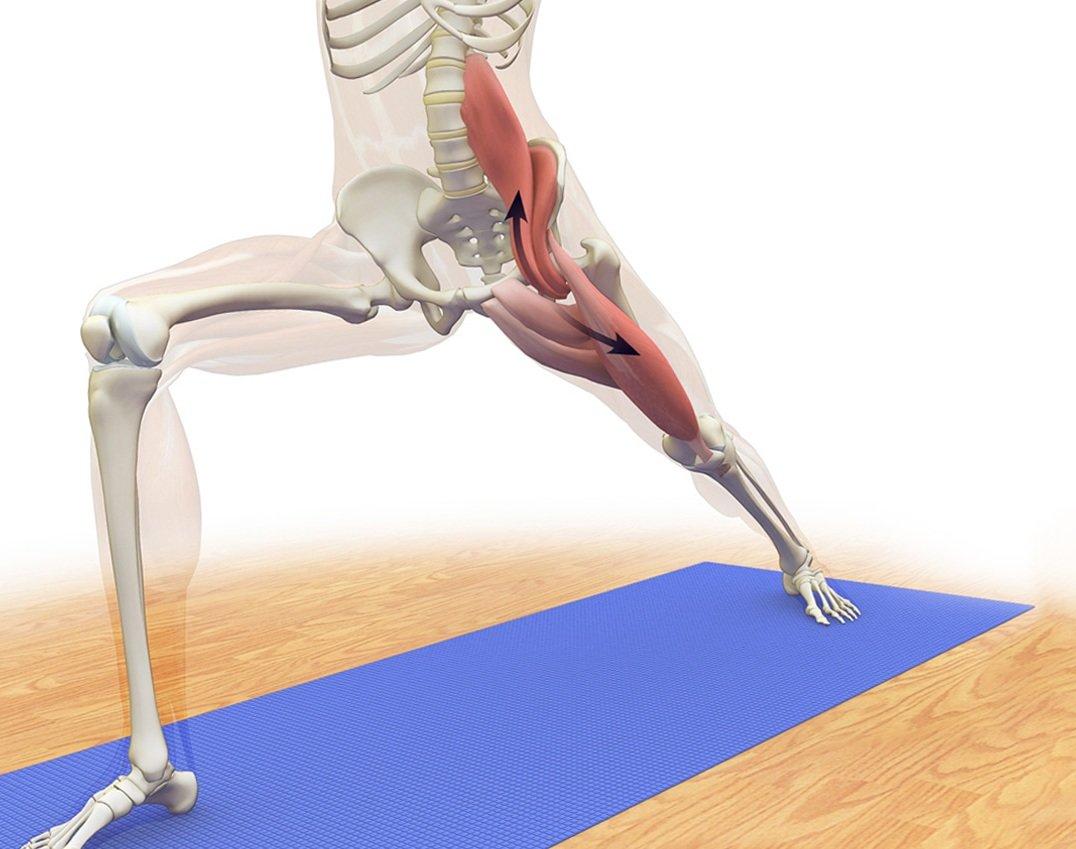 Мышцы спины: анатомическая схема и функции поверхностных, глубоких и продольных, комплекс упражнения для укрепления