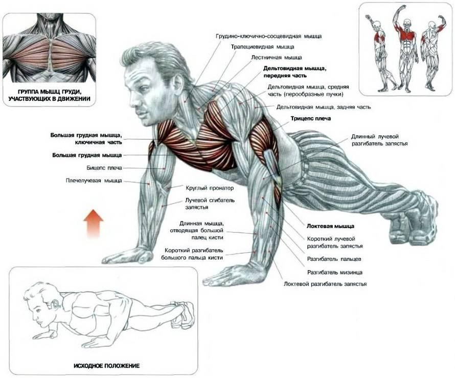Самые эффективные упражнения для рук в тренажерном зале, чтобы накачать мышцы рук