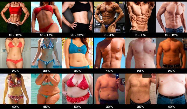 Норма жира в организме женщин и мужчин, таблица и формула расчета