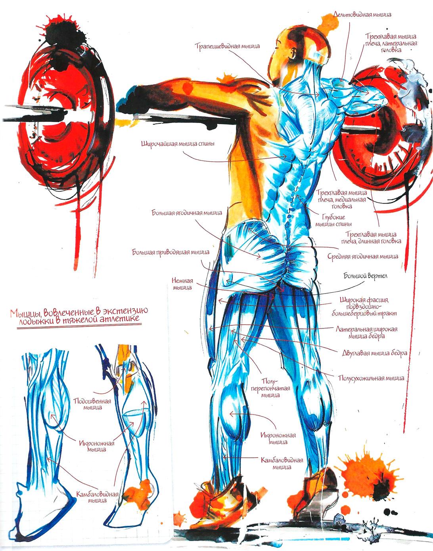 Рывок штанги с пола: тренировка и техника выполнения в тяжелой атлетике | irksportmol.ru
