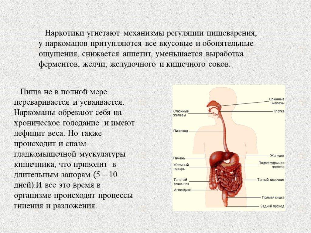 Процесс пищеварения в организме у человека: этапы, последовательность, значение и физиология расщепления и усвоения веществ