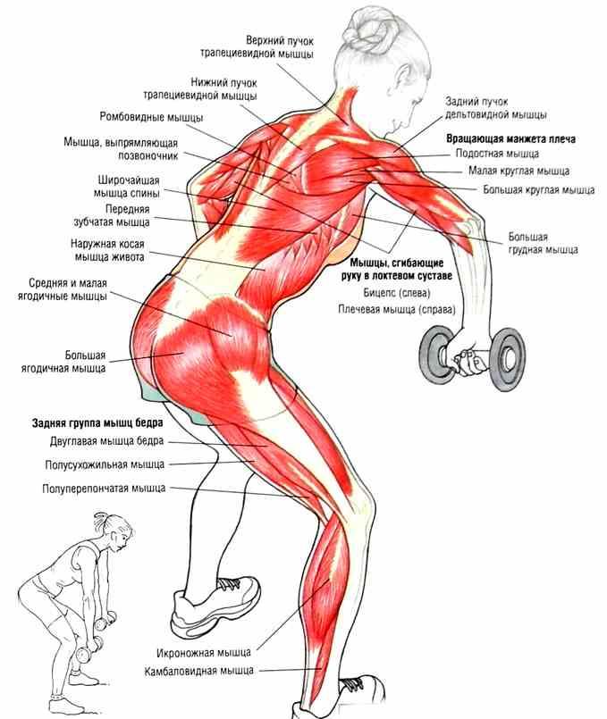 Лучший способ как быстро накачаться и нарастить мышечную массу