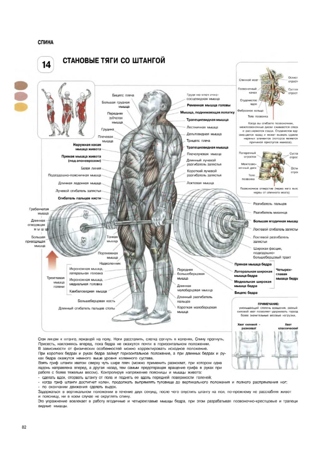С какими мышечными группами делать становую тягу: спина или ноги?