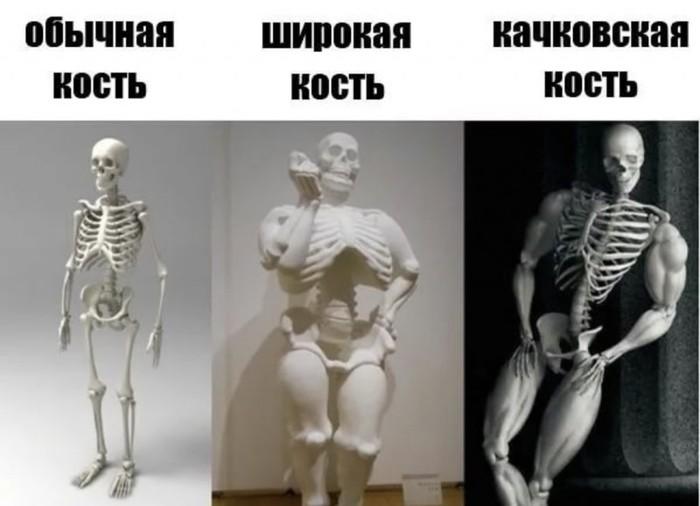 Тяжелая кость: есть ли оправдание большому весу от скелета?