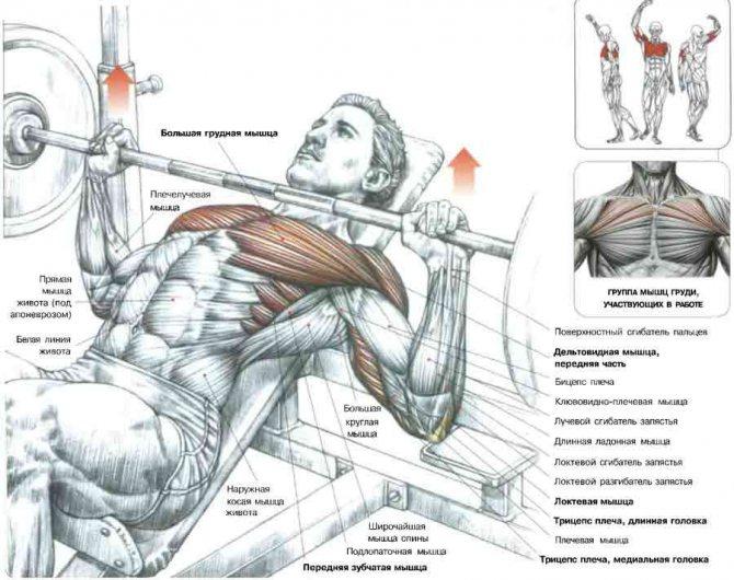Жим в хаммере на плечи и грудные мышцы, сидя и лежа