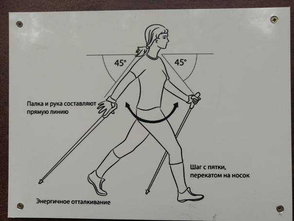 Правила скандинавской ходьбы для начинающих