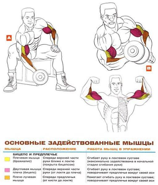 Топ лучших упражнений на бицепс в домашних условиях