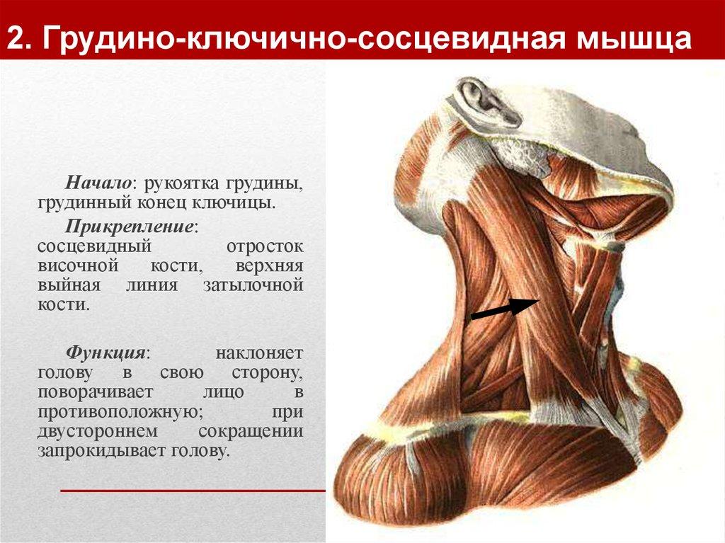 Упражнения для укрепления мышц шеи при остеоходрозе