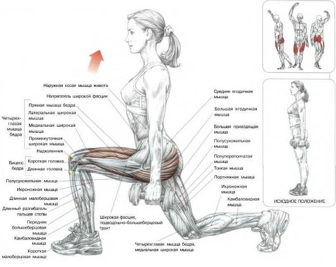 Тренировка ног в тренажерном зале: как накачать ноги мужчине в спортзале
