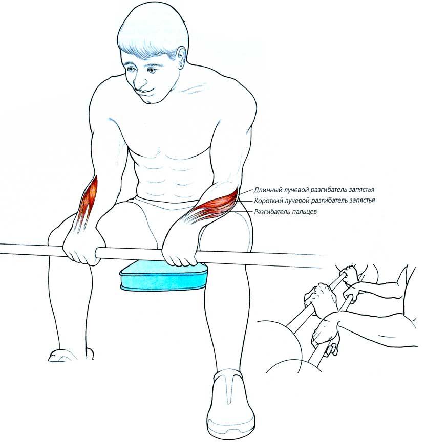 Эффективные упражнения для развития мышц кистей. как накачать пальцы рук и запястье | ripa-russia.ru