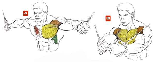 Сведение рук в кроссовере – задействованные мышцы, правильная техника, варианты упражнения