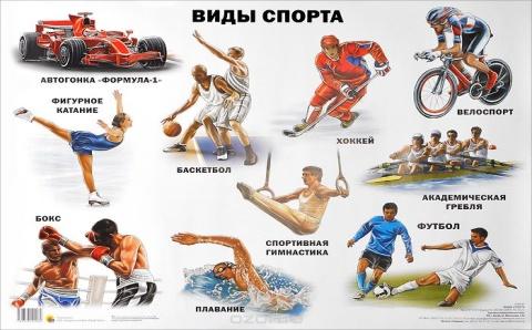 На какой вид спорта лучше делать ставки - выбираем самый лучший и предсказуемый спорт