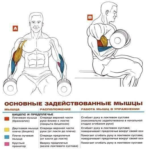 Упражнения для силы рук: комплексы и рекомендации по развитию мышц рук