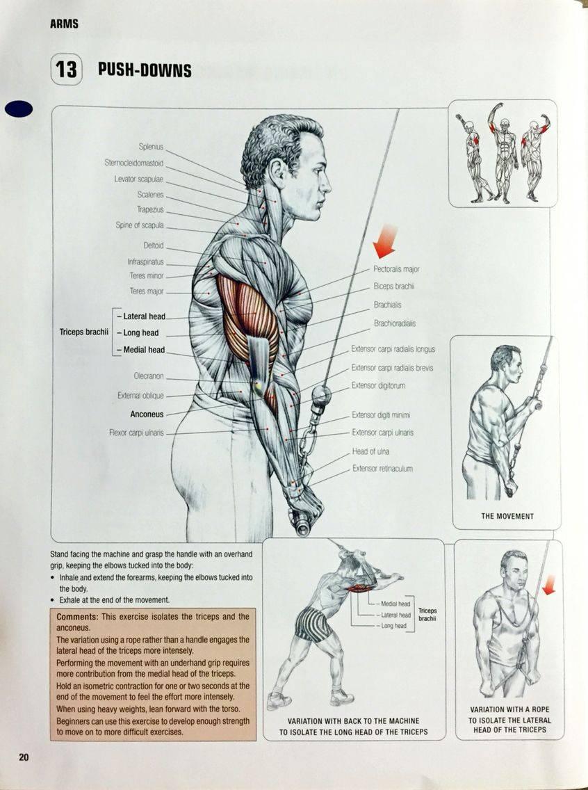 Разгибание рук на верхнем блоке: виды и техника - школа тела