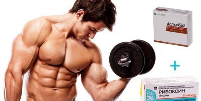 Польза рибоксина в спорте, бодибилдинге, пауэрлифтинге