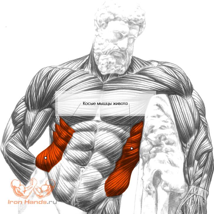 Упражнения на косые мышцы живота: как накачать боковой пресс для мужчин и женщин в домашних условиях или в тренажерном зале