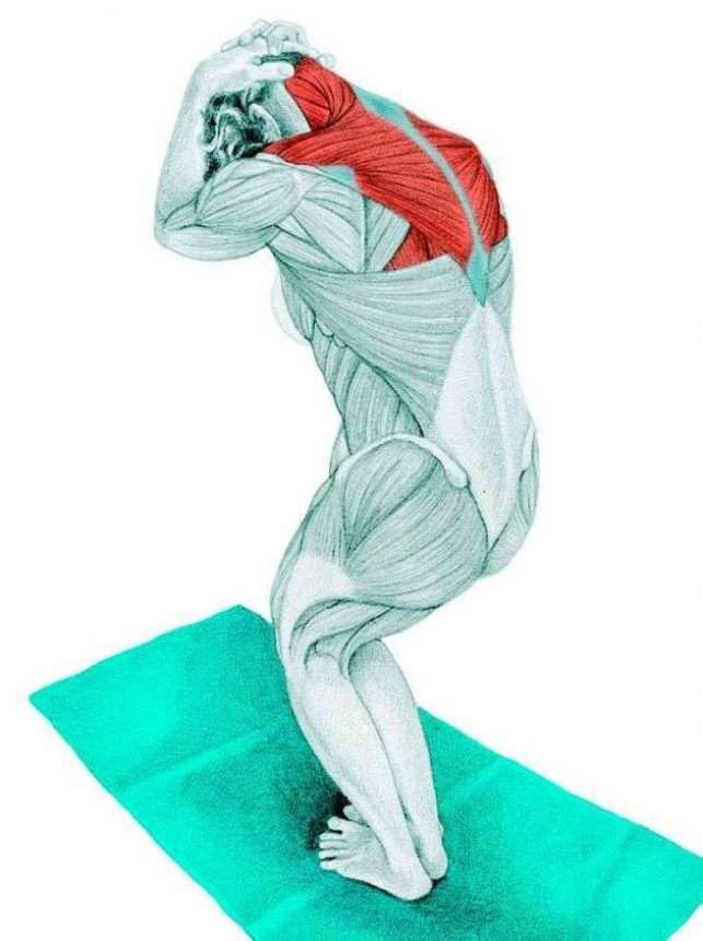 Эффективные упражнения для растяжки мышц спины | rulebody.ru — правила тела