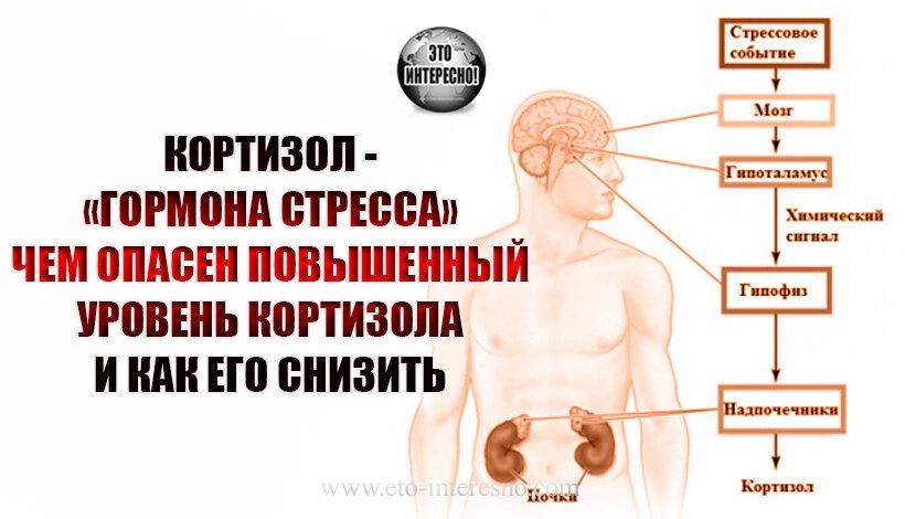 Что такое метаболизм? как анаболизм и катаболизм влияет на массу тела? - dailyfit