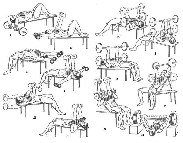 Как накачать грудные мышцы гантелями - упражнения