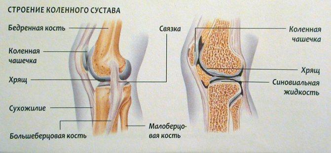 Как укрепить суставы и связки? (+ советы по питанию)
