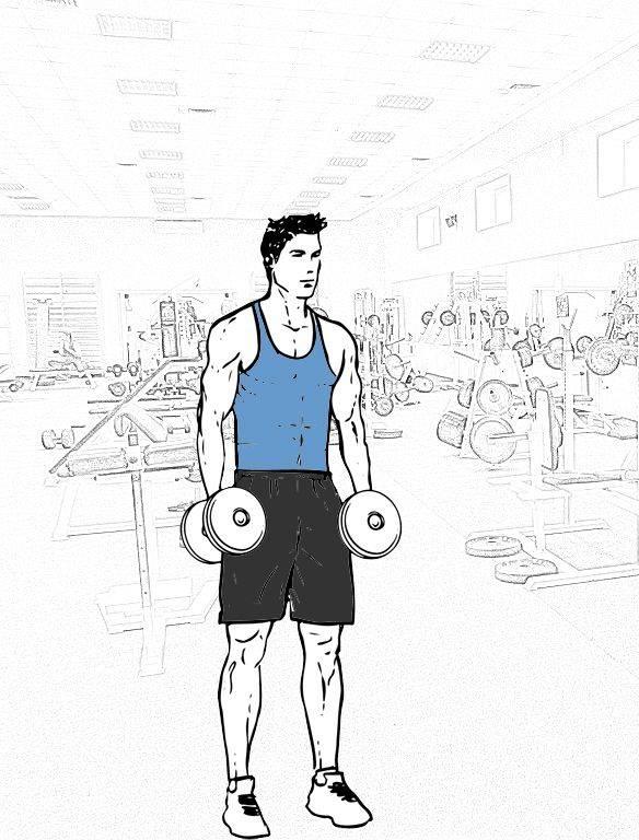 Сгибания зоттмана - одно упражнение для массивных рук