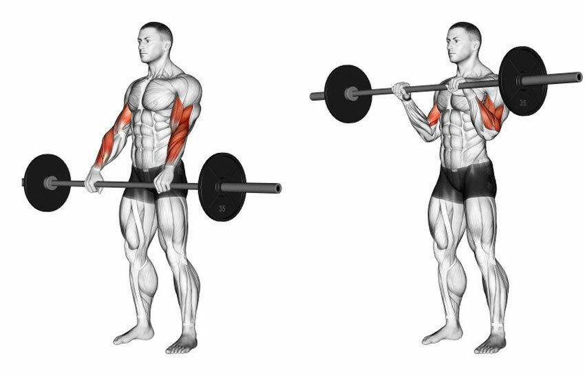 Тяга штанги к подбородку узким хватом: видео и фото упражнения