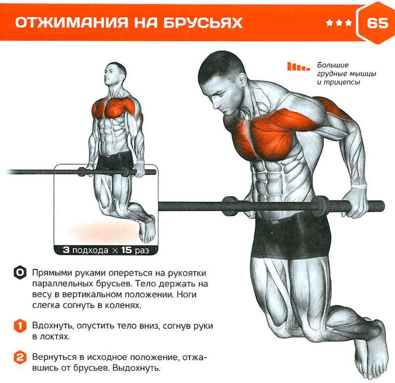 Подтягивания в гравитроне. техника и основные преимущества упражнения для мышц спины