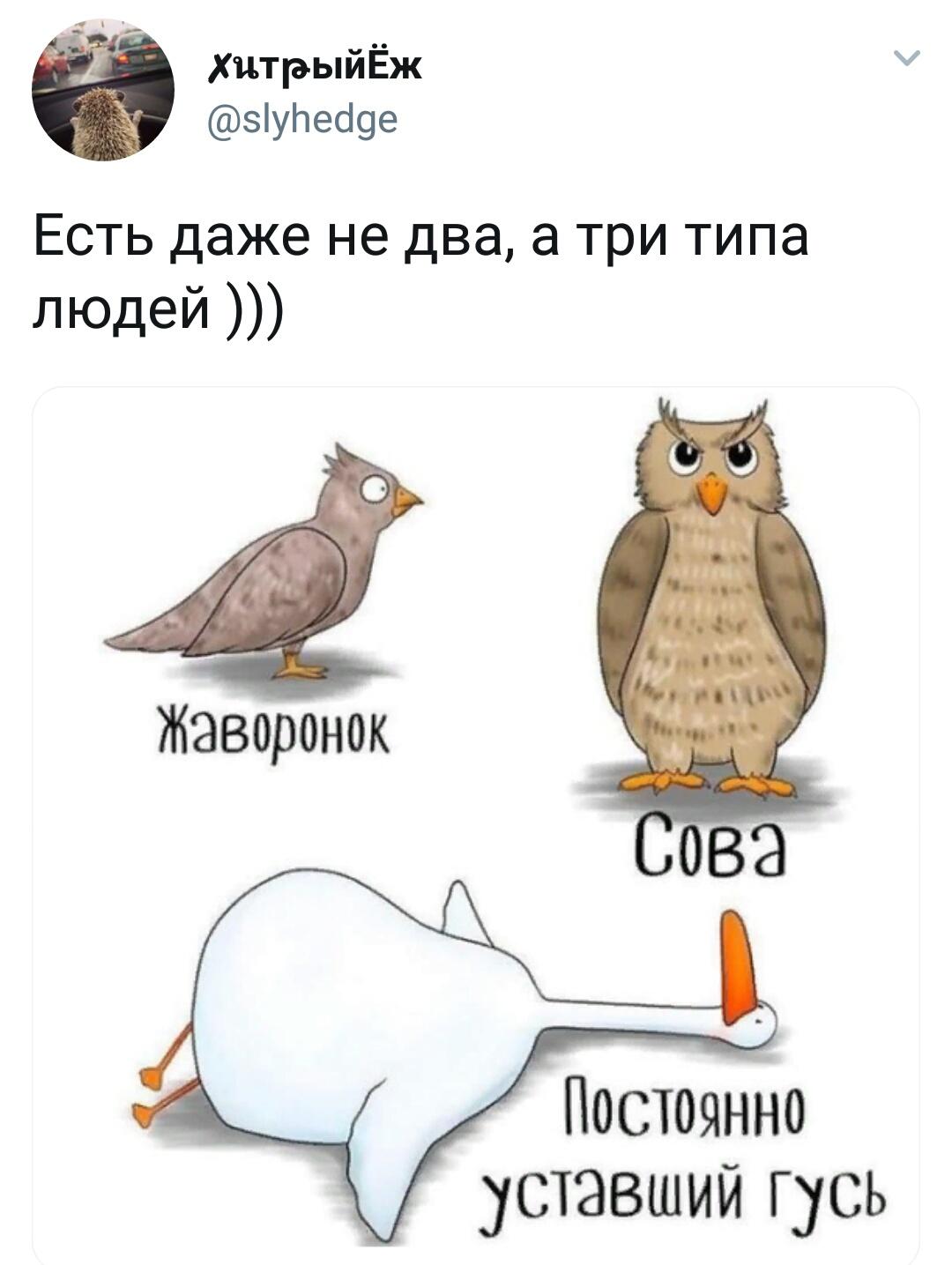 Люди жаворонки, совы и голуби — в чем особенности каждого типа
