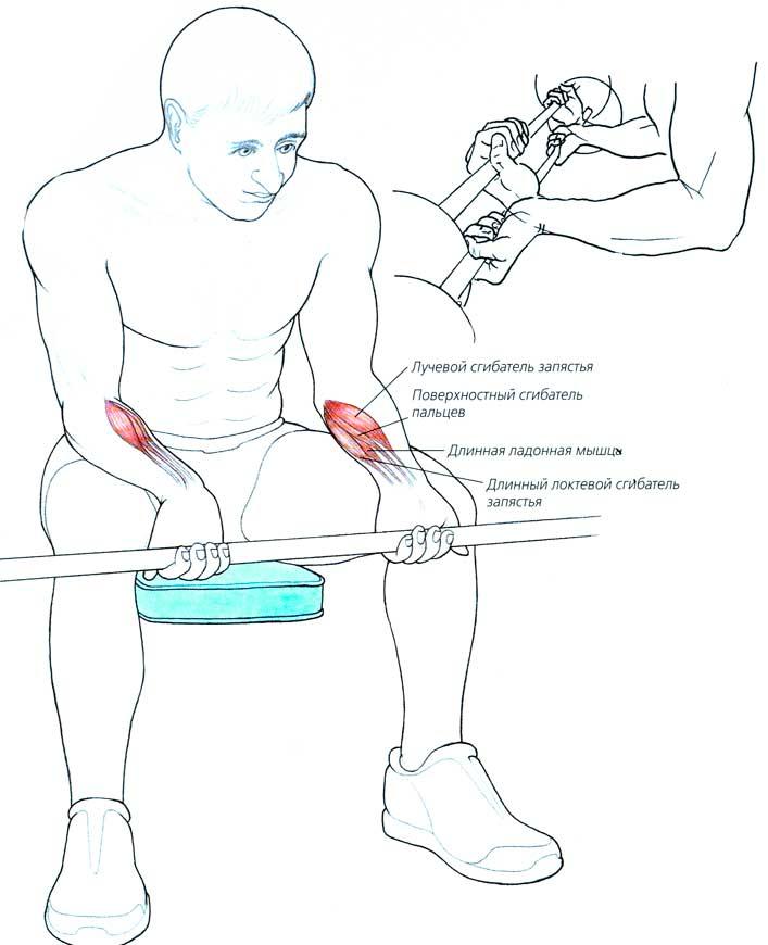 Как укрепить запястье: кисти, связки, суставы, мышцы, предплечья, кулаки, пальцы