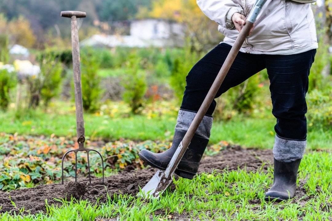 Вместо фитнеса: можно ли считать работу в саду тренировкой? :: как правильно ::  «живи!
