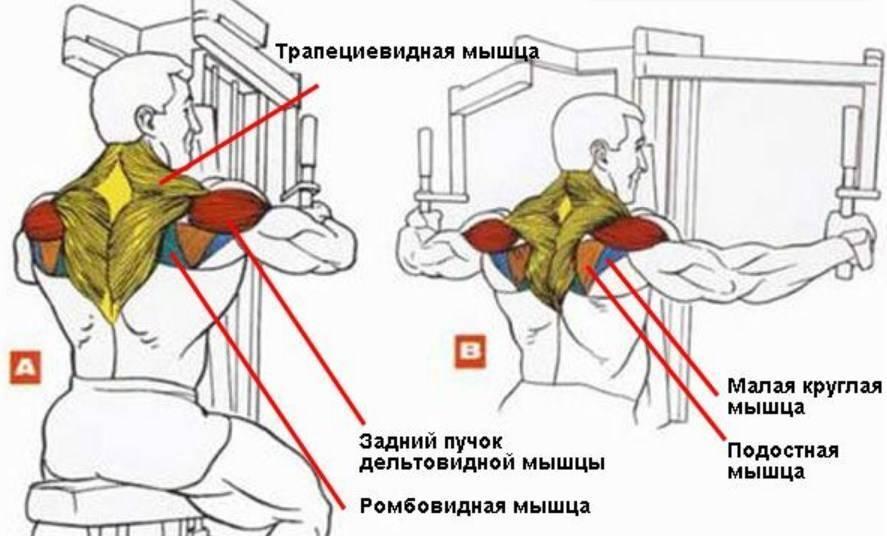 Разведение рук в тренажере (обратные разведения) техника