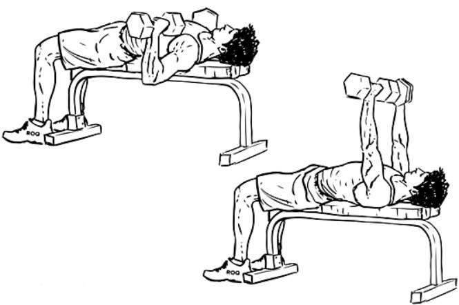 Жим штанги лежа: правильная техника жима (на горизонтальной скамье)
