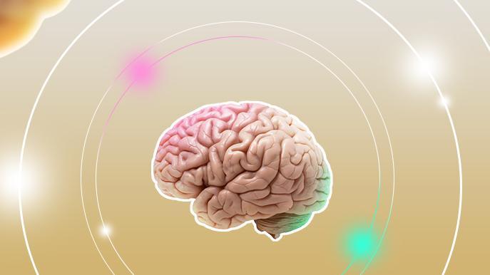 Средства улучшающие память и работу мозга: травы, упражнения, продукты