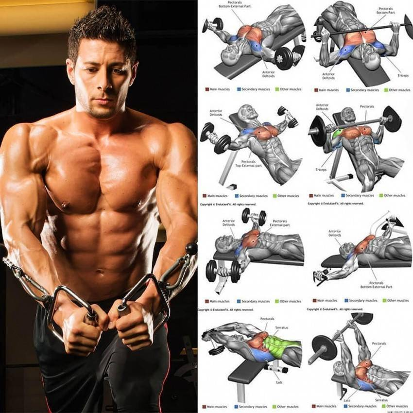 Как накачать мышцы груди мужчинам в тренажерном зале — спорт и красота