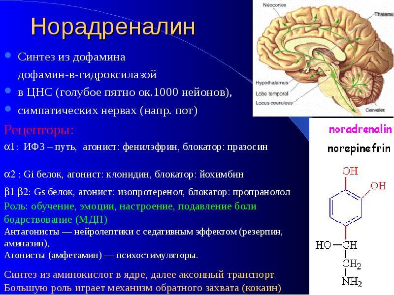 Гормон дофамин: функции и действие, как повысить уровень в организме | здоровье и все для него