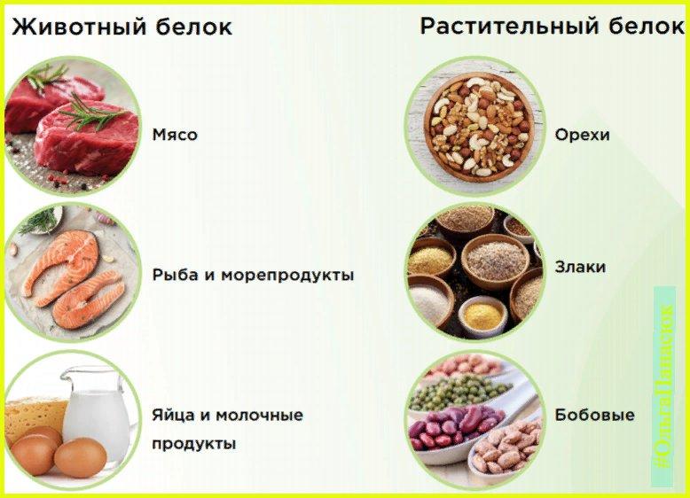 Что относится к белковой пище: список продуктов