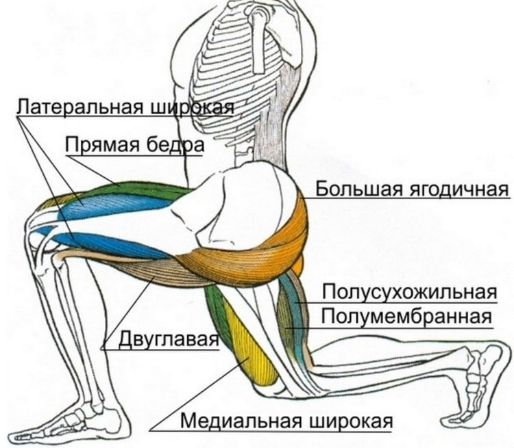Приседания на одной ноге (приседания пистолетиком): польза, техника выполнения