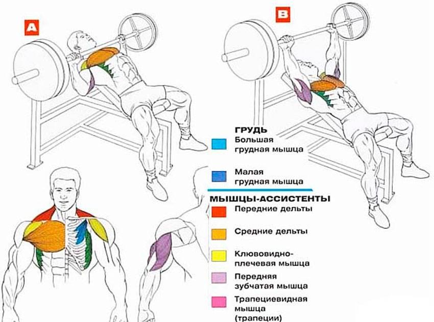 Пуловер упражнение, назначение, техника выполнения, рекомендации