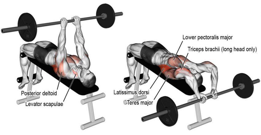 Упражнение пуловер: эффективность и задействованные группы мышц, правильная техника со штангой и гантелями