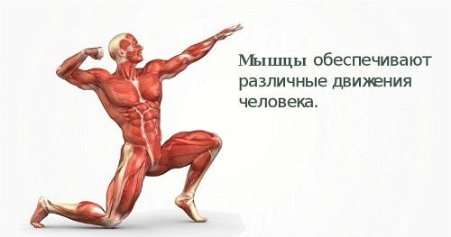 Метод кинезитерапии доктора бубновского. рекомендации при различных заболеваниях.   магнитотерапия