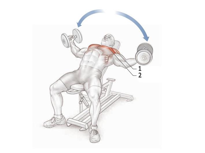 Как качать грудные мышцы гантелями — программа лучших упражнений