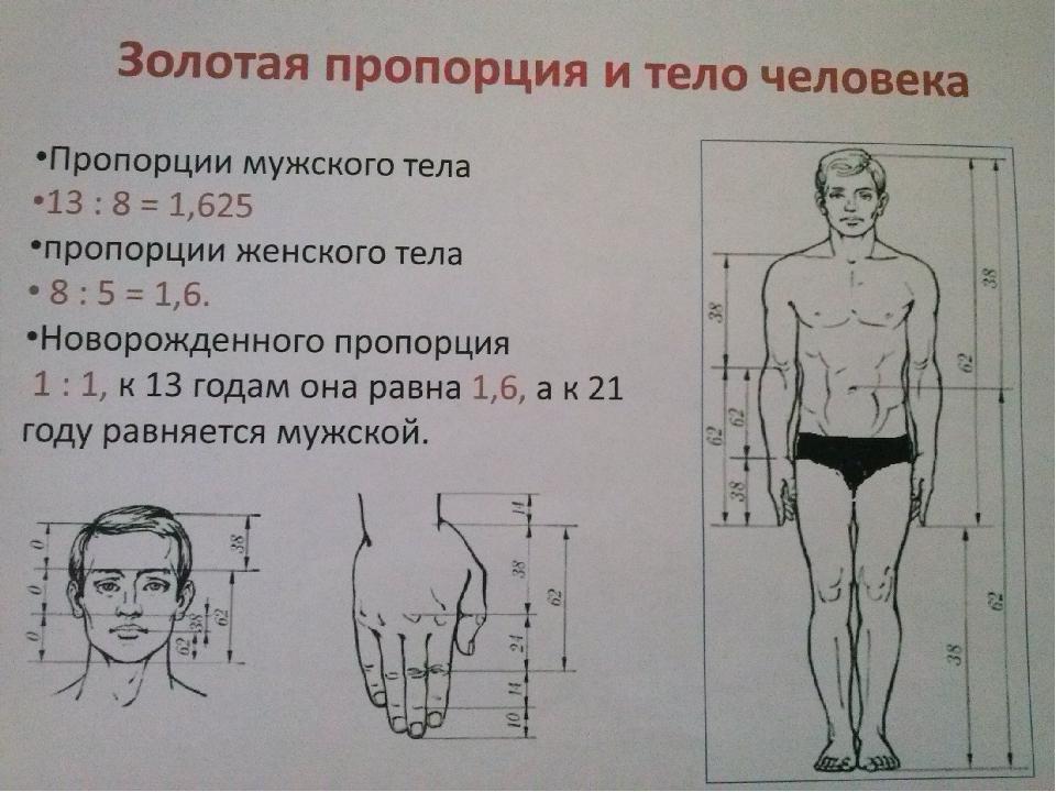 Идеальные пропорции женского тела: по росту в таблице, идеальная фигура